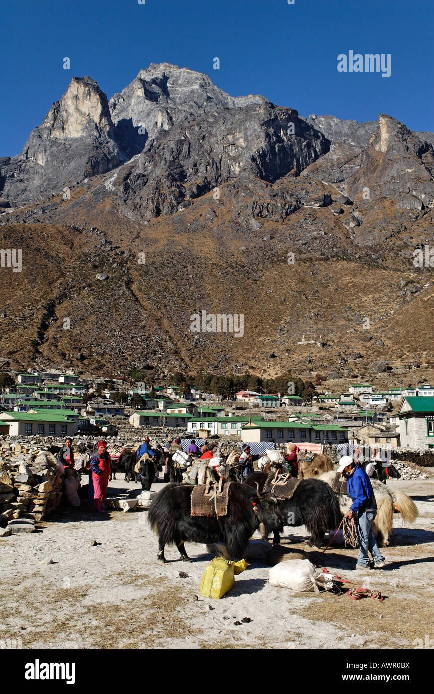 Tibetan yak caravane at Sherpa village Khumjung, holy mountain Khumbi Yul Lha (Khumbila, 5761), Sagarmatha National - Stock Image