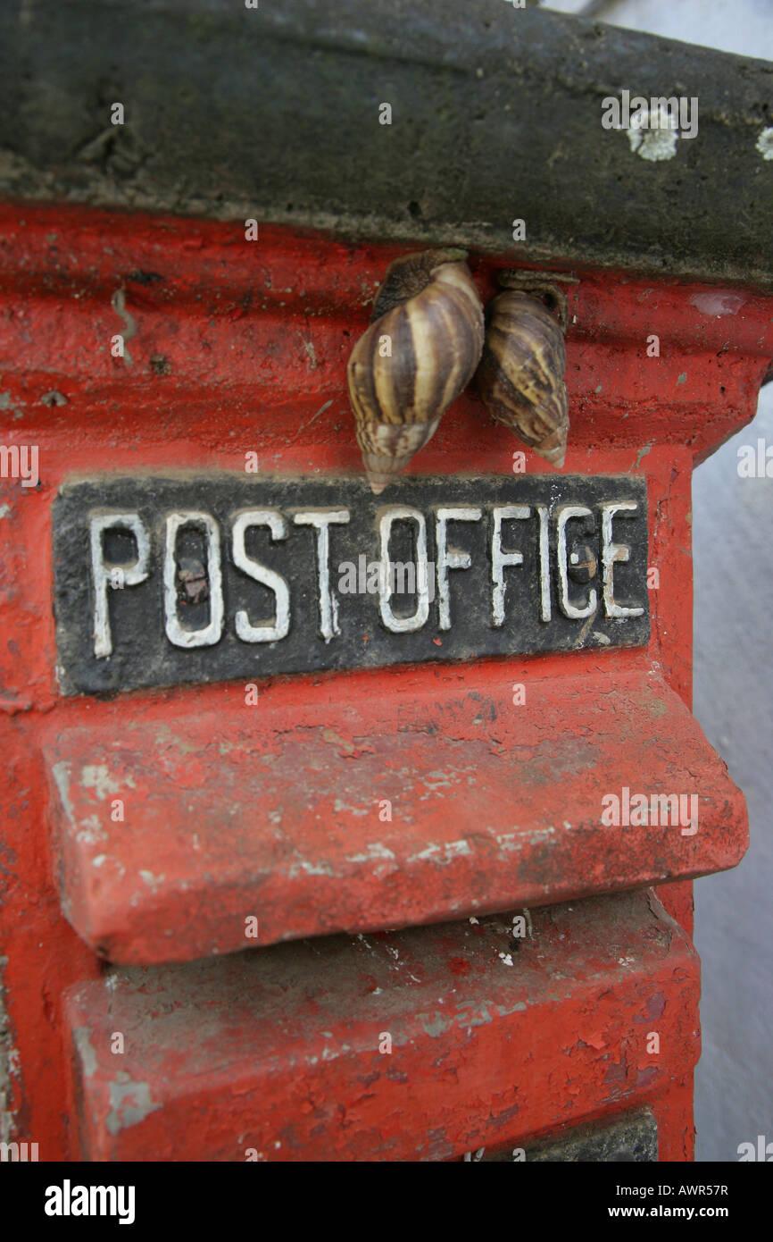 Snails sitting on a letter box in Sri Lanka, Asia Stock Photo