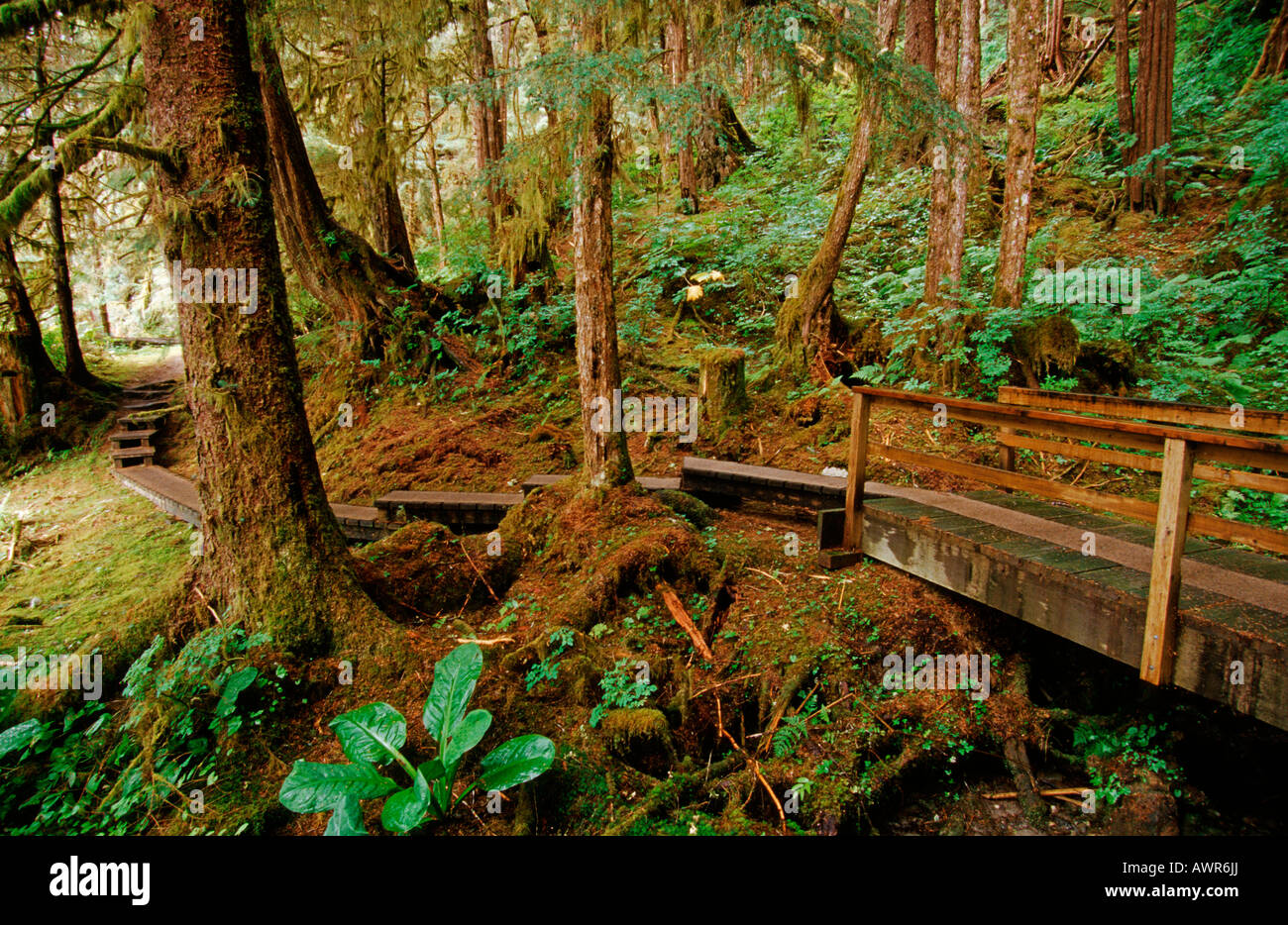 Footpath through Tongass National Forest, the world's largest temperate rainforest, southeastern Alaska, USA Stock Photo