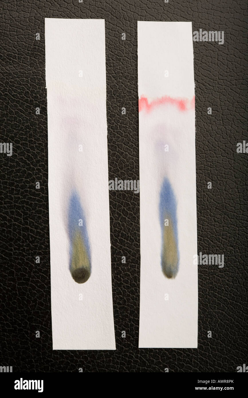 Paper chromatography of two different types of black ink - Stock Image