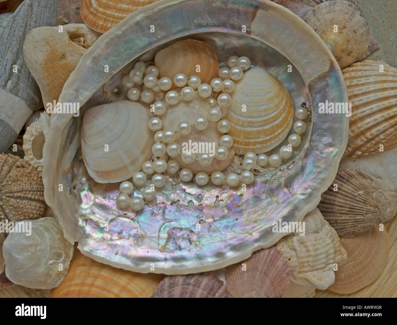 gleaming seashell with a chain of pearls - Stock Image