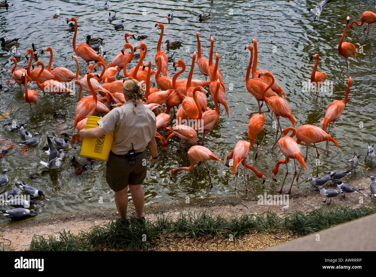 Modern Busch Gardens Tampa Address Image Collection - Brown Nature ...
