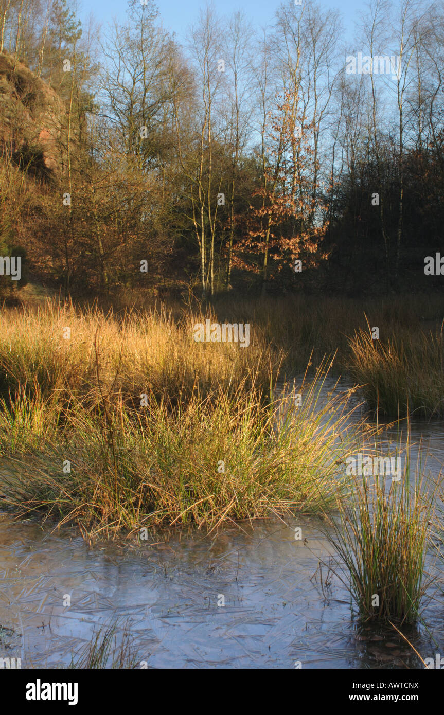 Winter morning at Parkhall Countryside Park - Stock Image