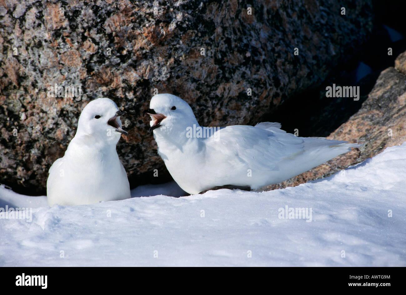 Antarctican Stock Photos & Antarctican Stock Images - Alamy
