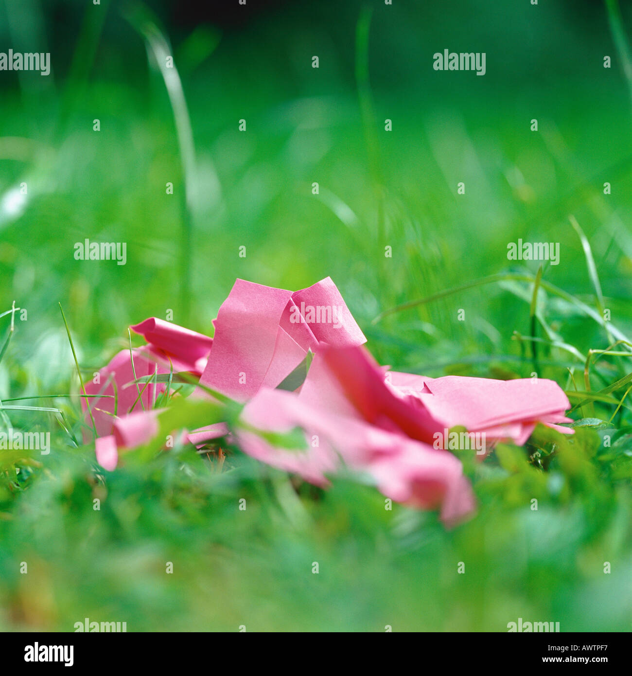 Crumpled pink paper in grass - Stock Image
