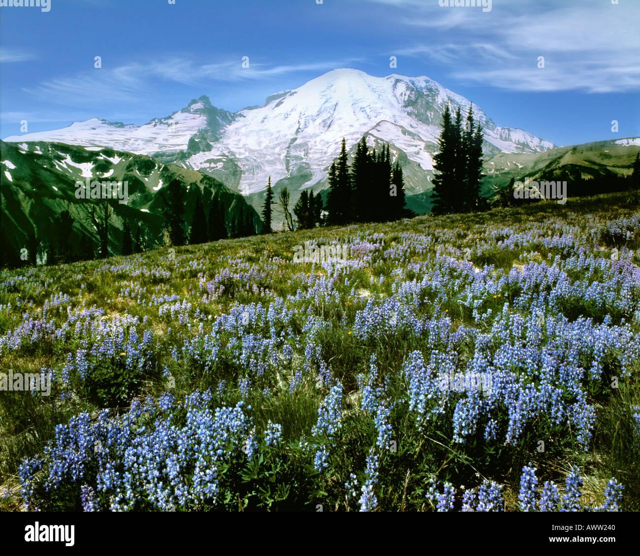 USA - WASHINGTON: Mount Rainier National Park - Stock Image