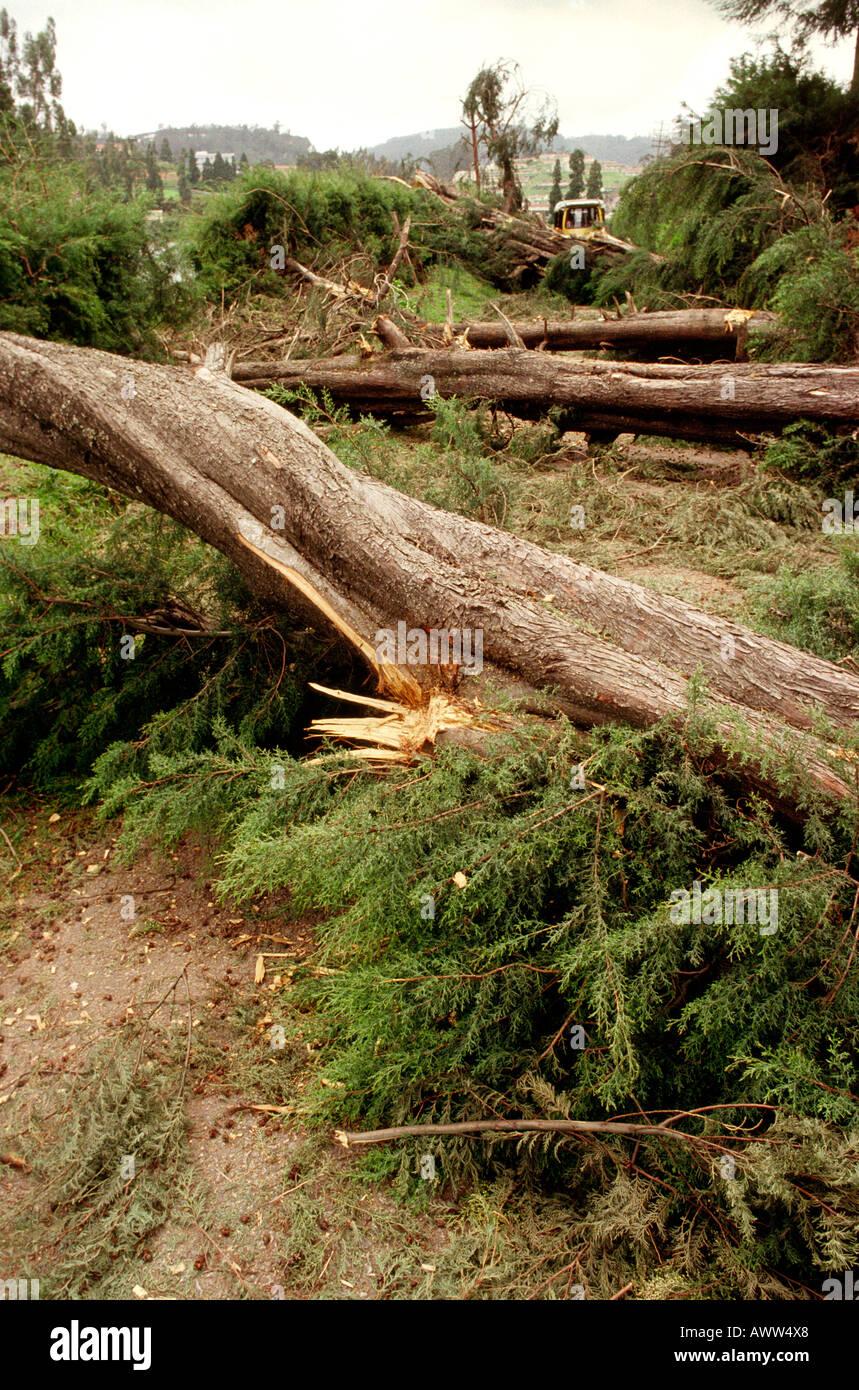 India Tamil Nadu Ootacamund monsoon weather storm damaged