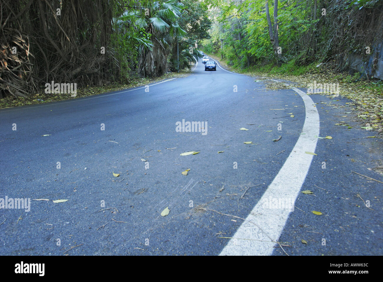 Country road - Stock Image
