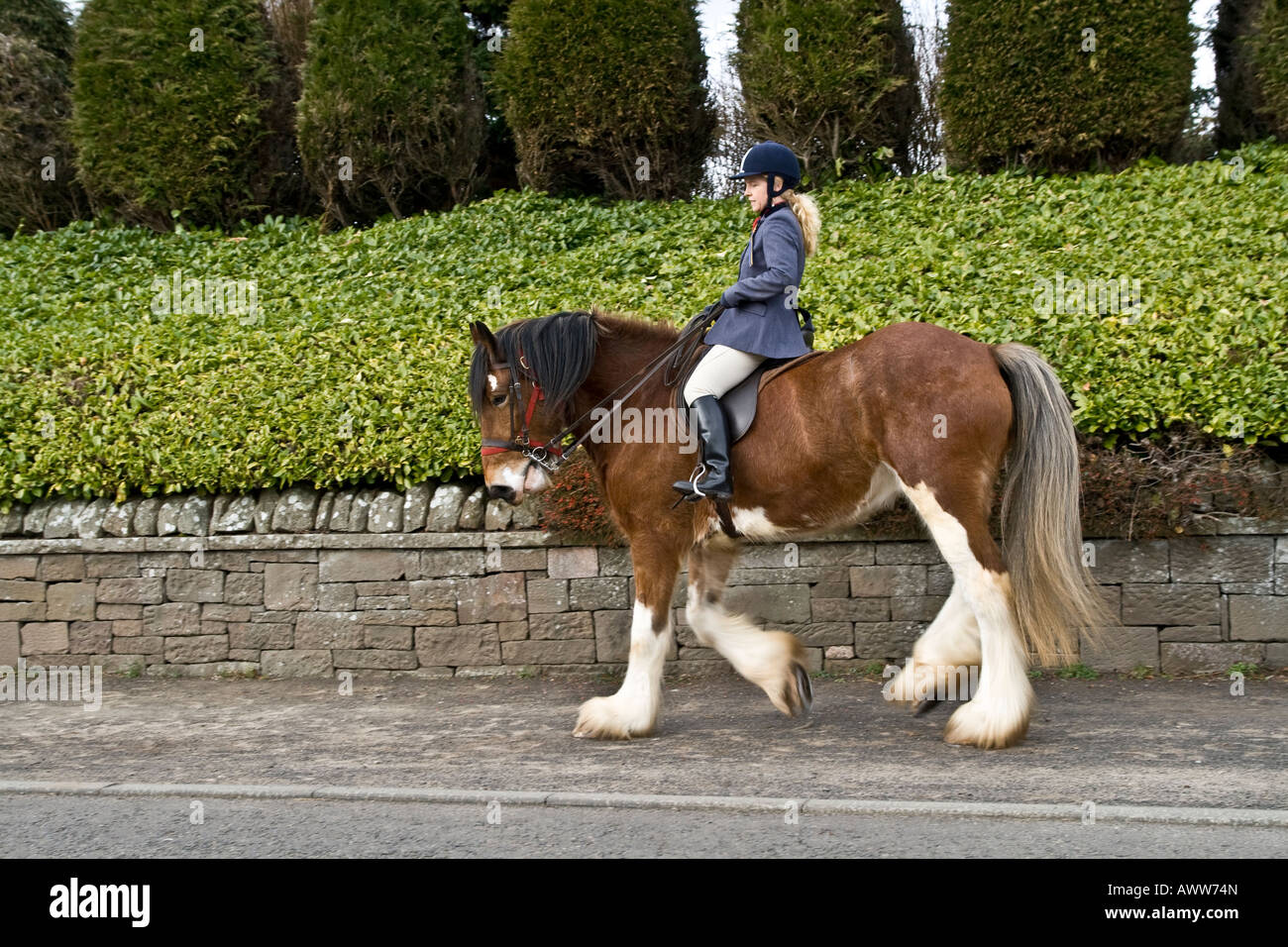 """Woman equestrian rider on horseback parading her Clydesdale horse along the sidewalk in """"Coupar Angus"""" Scotland Stock Photo"""
