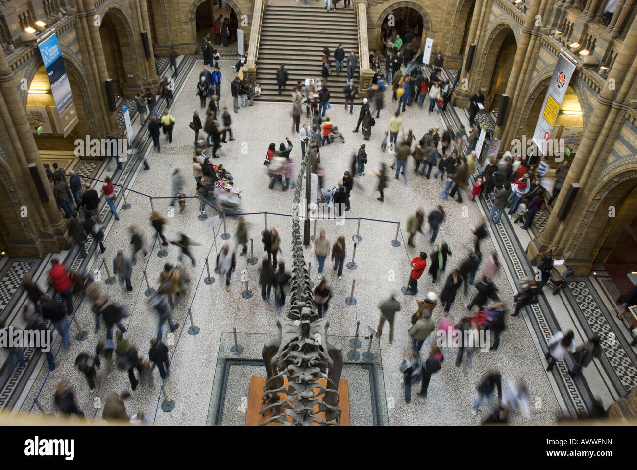 A view of the ground floor area of the Natural History Museum in South Kensington, London, UK. - Stock Image