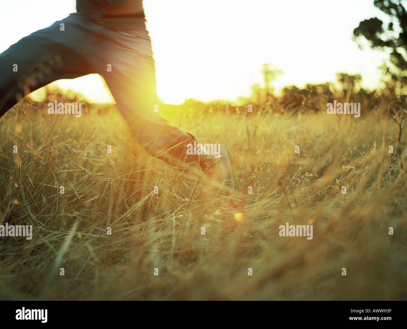 Person in field of tall grass, low section - Stock Image