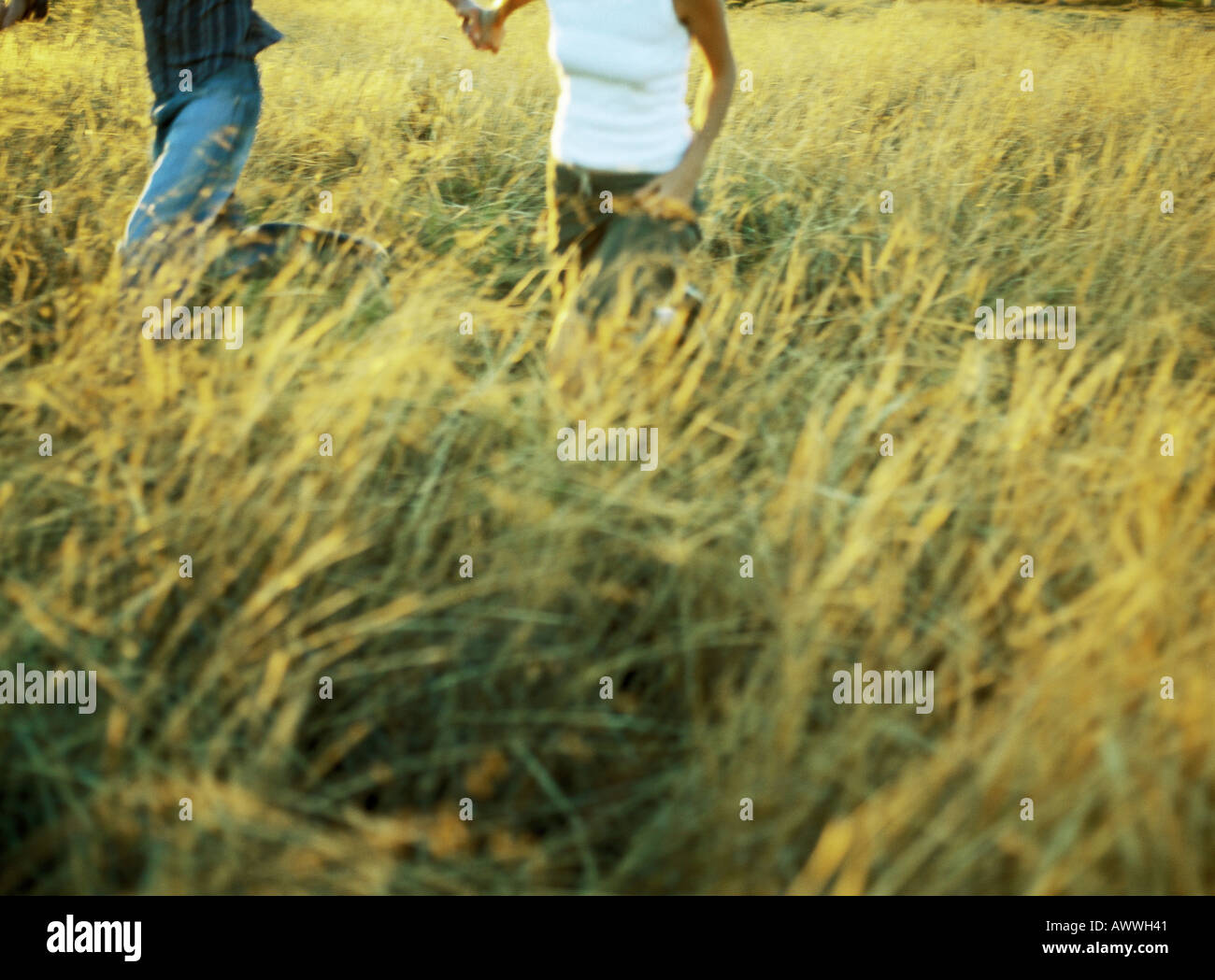 Couple running in field of tall grass, mid-section - Stock Image