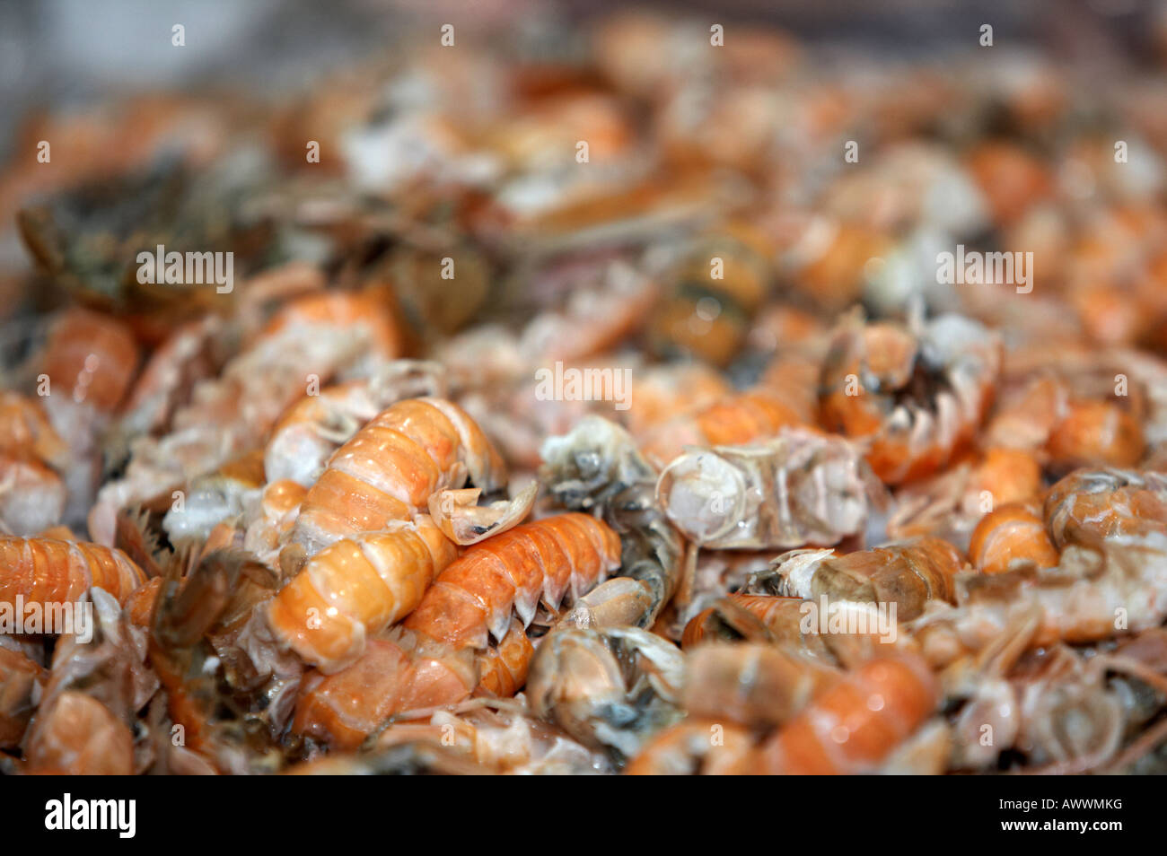 pile of prawn tails on a fishmongers fresh fish stall at an indoor market - Stock Image