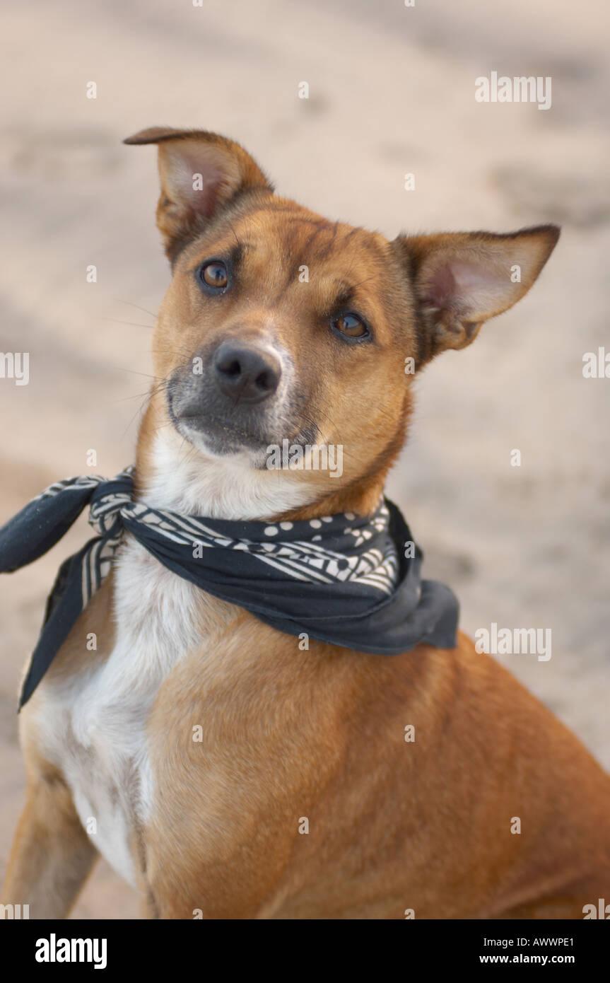 Dog on beach, Cornwall - Stock Image