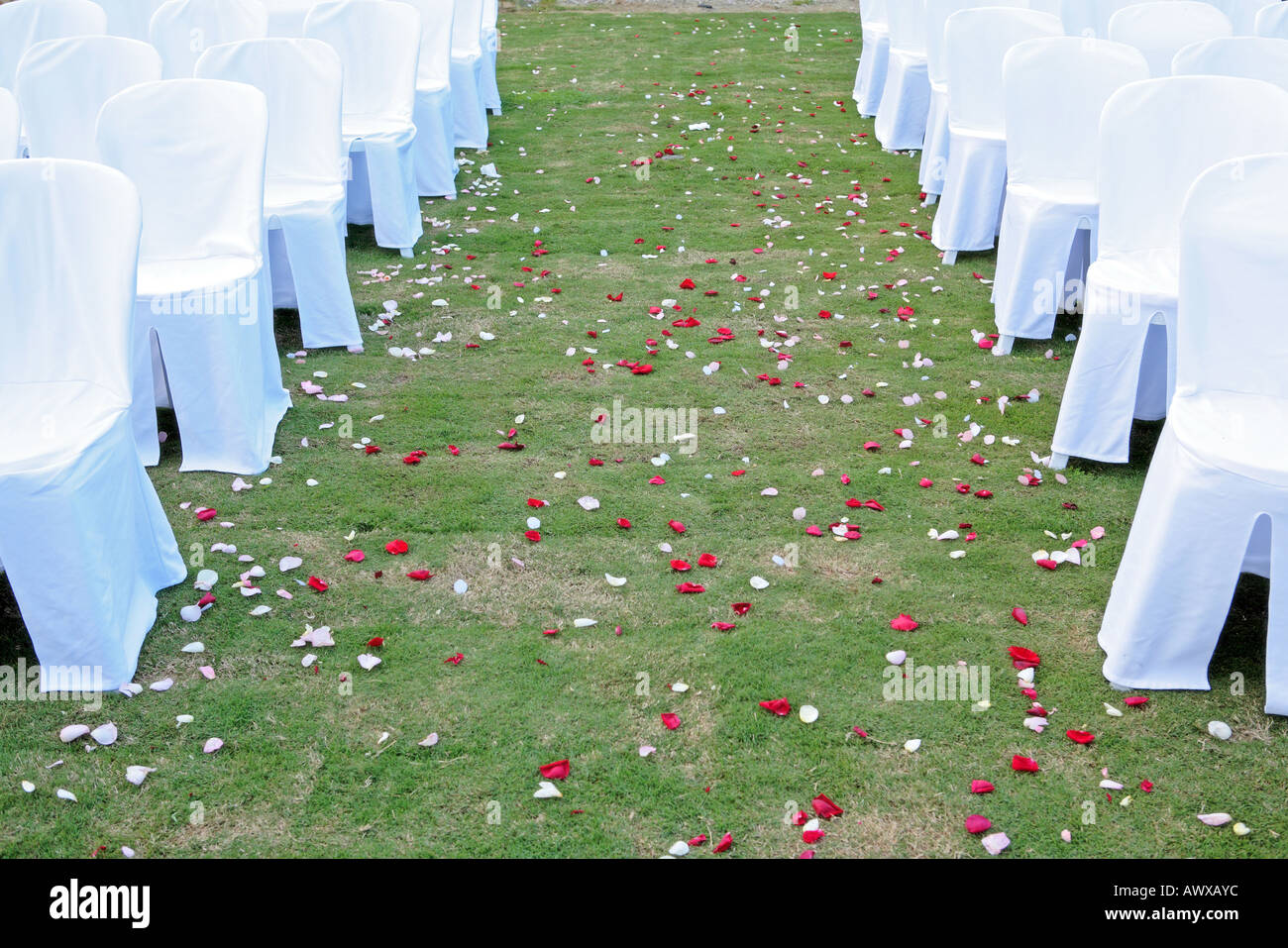 Deserted Aisle after recent wedding with white chairs and rose petal confetti - Stock Image