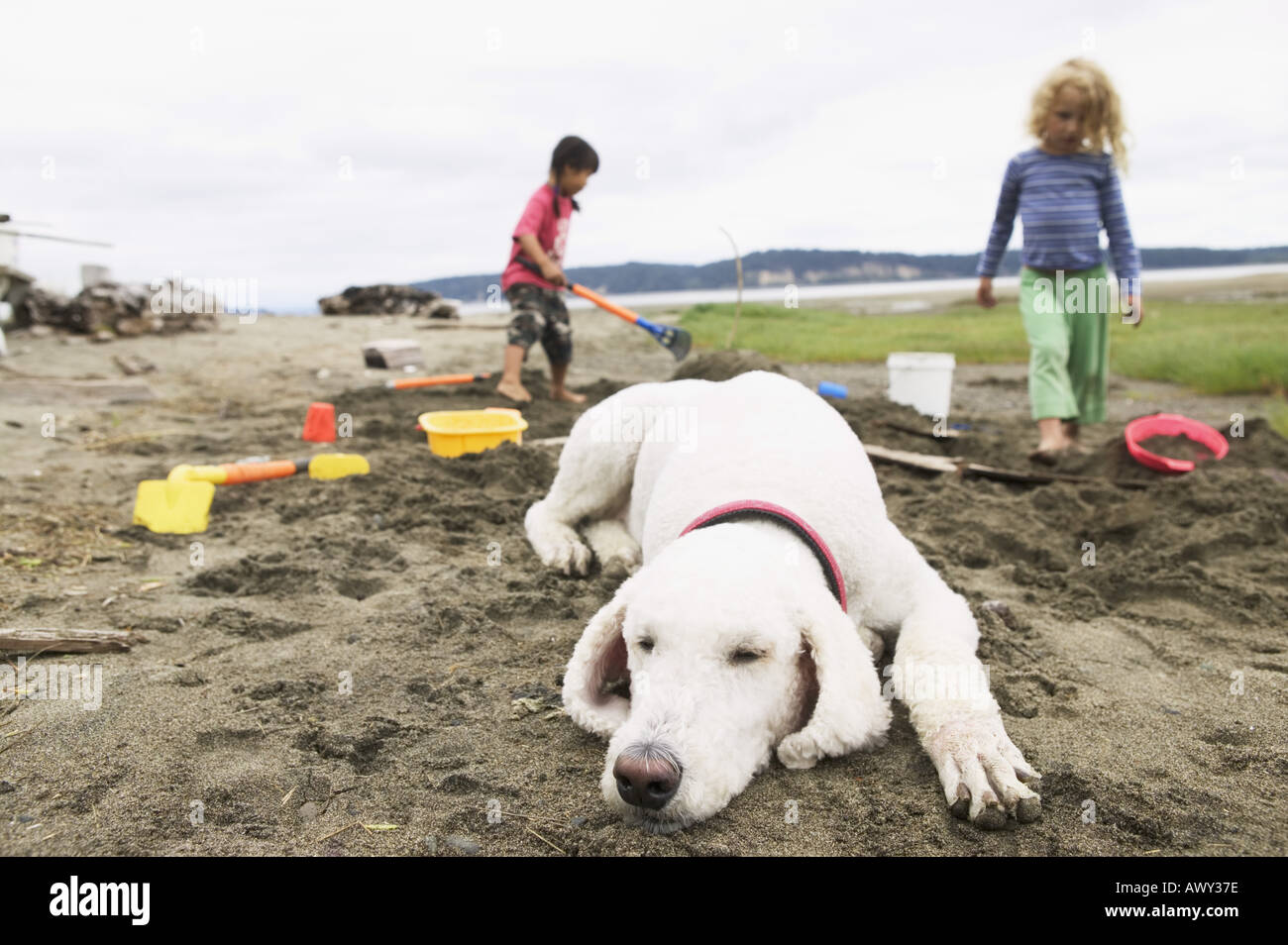 Dog sleeping on the beach while children play - Stock Image