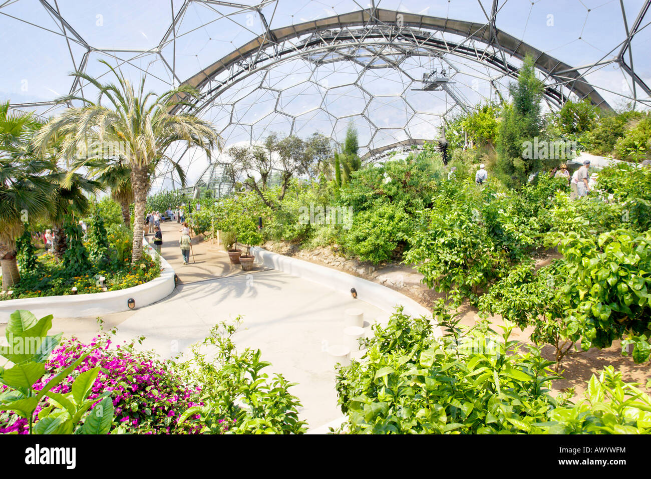 Eden Project Cornwall Dome Interior Stock Photos Amp Eden