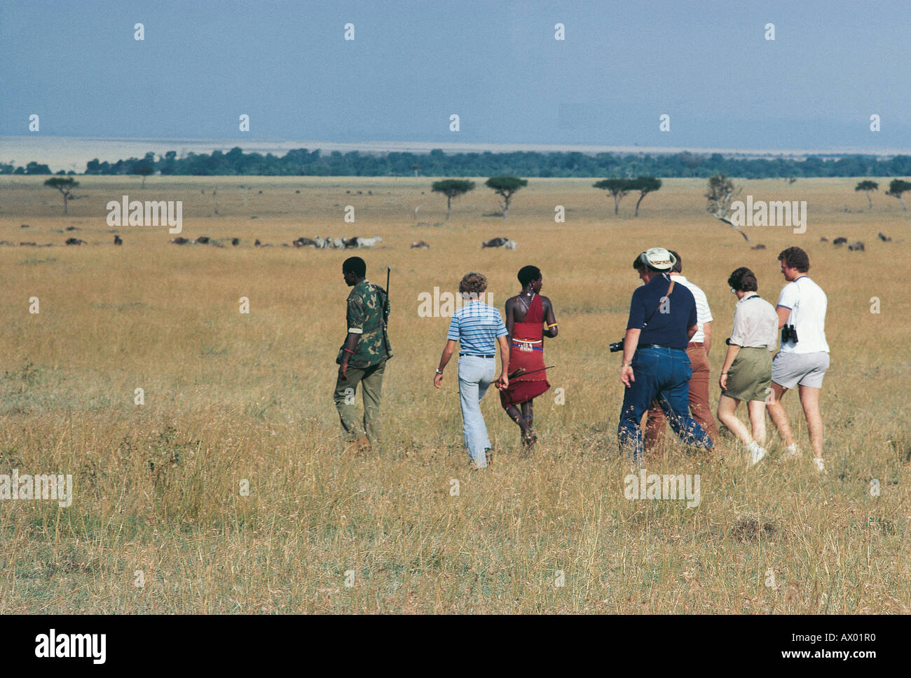 Ranger armed with hunting rifle and Maasai moran with clients on game walk in Masai Mara National Reserve Kenya - Stock Image