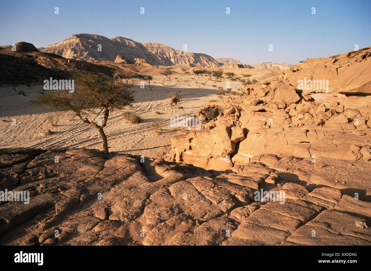 Sinai Desert near Nuweiba, Sinai, Egypt Stock Photo