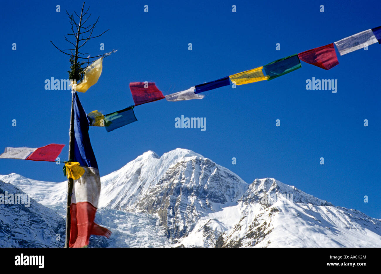 Colourful prayer flags, printed with holy verses and images