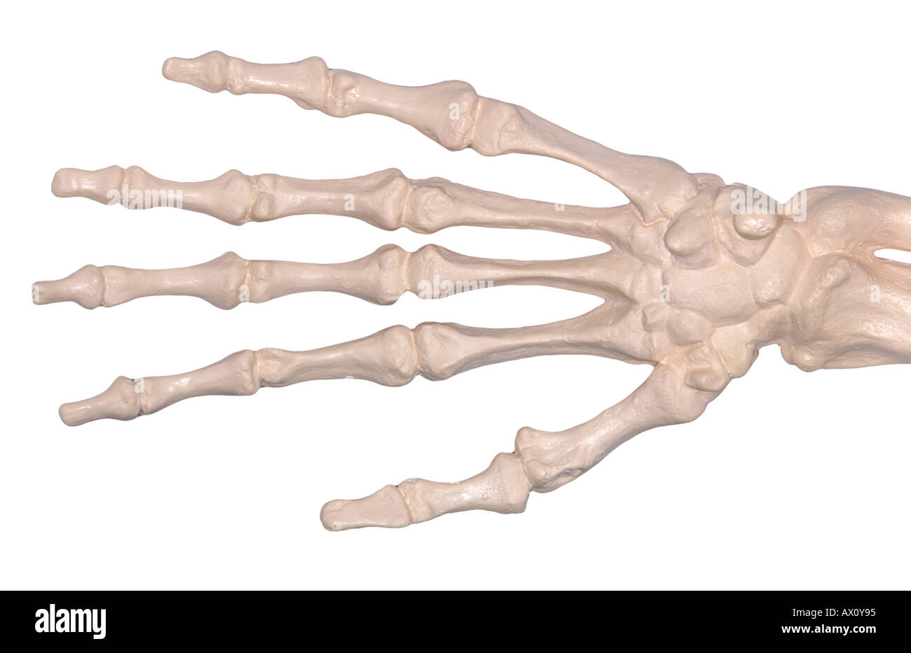 Skeleton Hand Stock Photos & Skeleton Hand Stock Images - Alamy