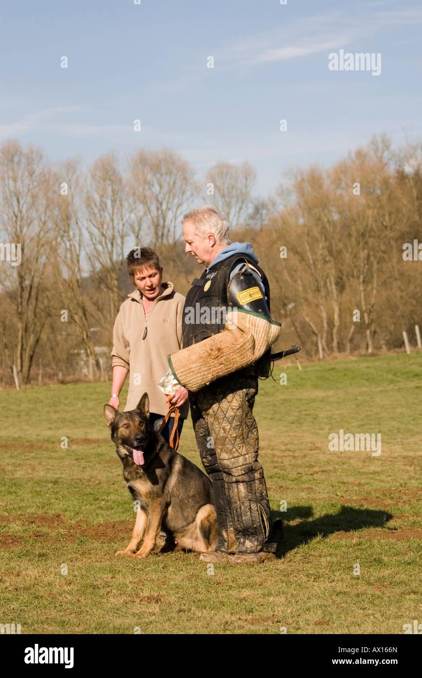 Man and woman training a German shepherd dog in protective behavior in Daun, Vulkaneifel, Germany, Europe - Stock Image