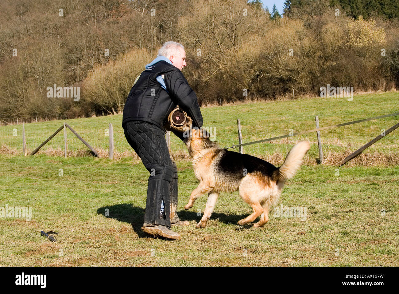 Man training a German shepherd dog in protective behavior in Daun, Vulkaneifel, Germany, Europe - Stock Image