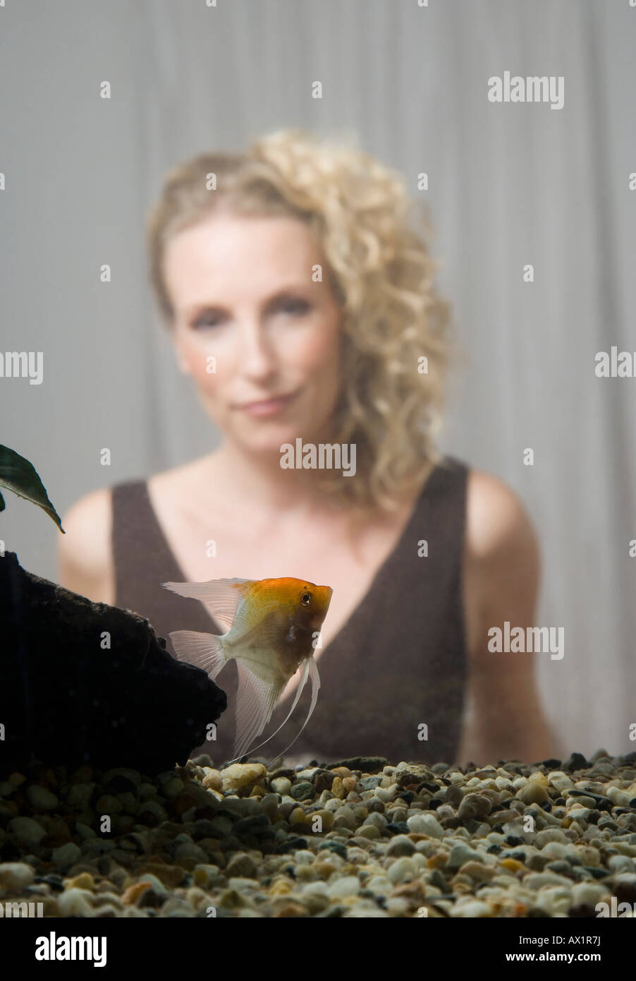 A mid adult woman in back of a home aquarium with a freshwater angelfish - Stock Image