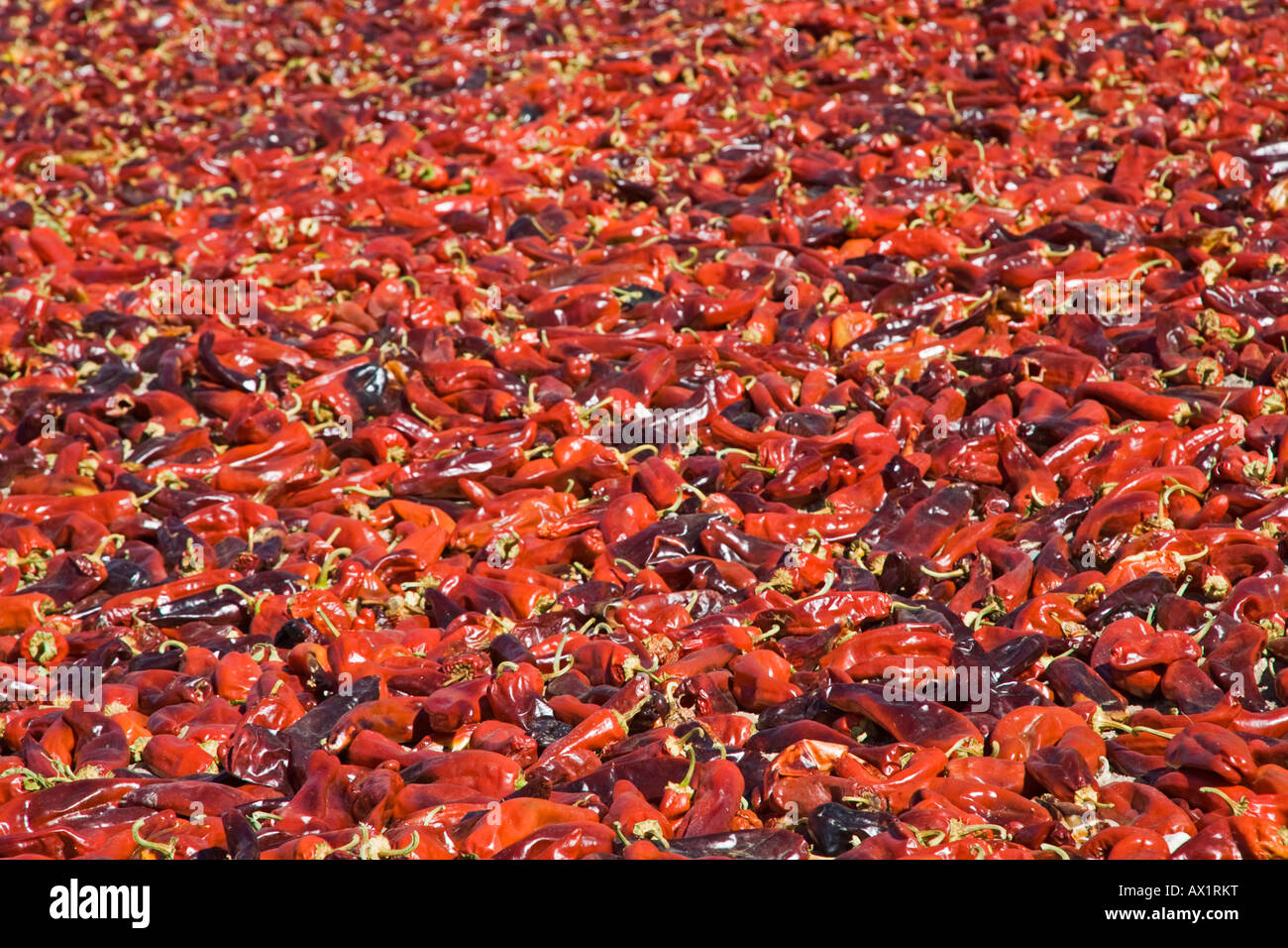 Paprika dry up in the sun, North Argentina, South America Stock Photo
