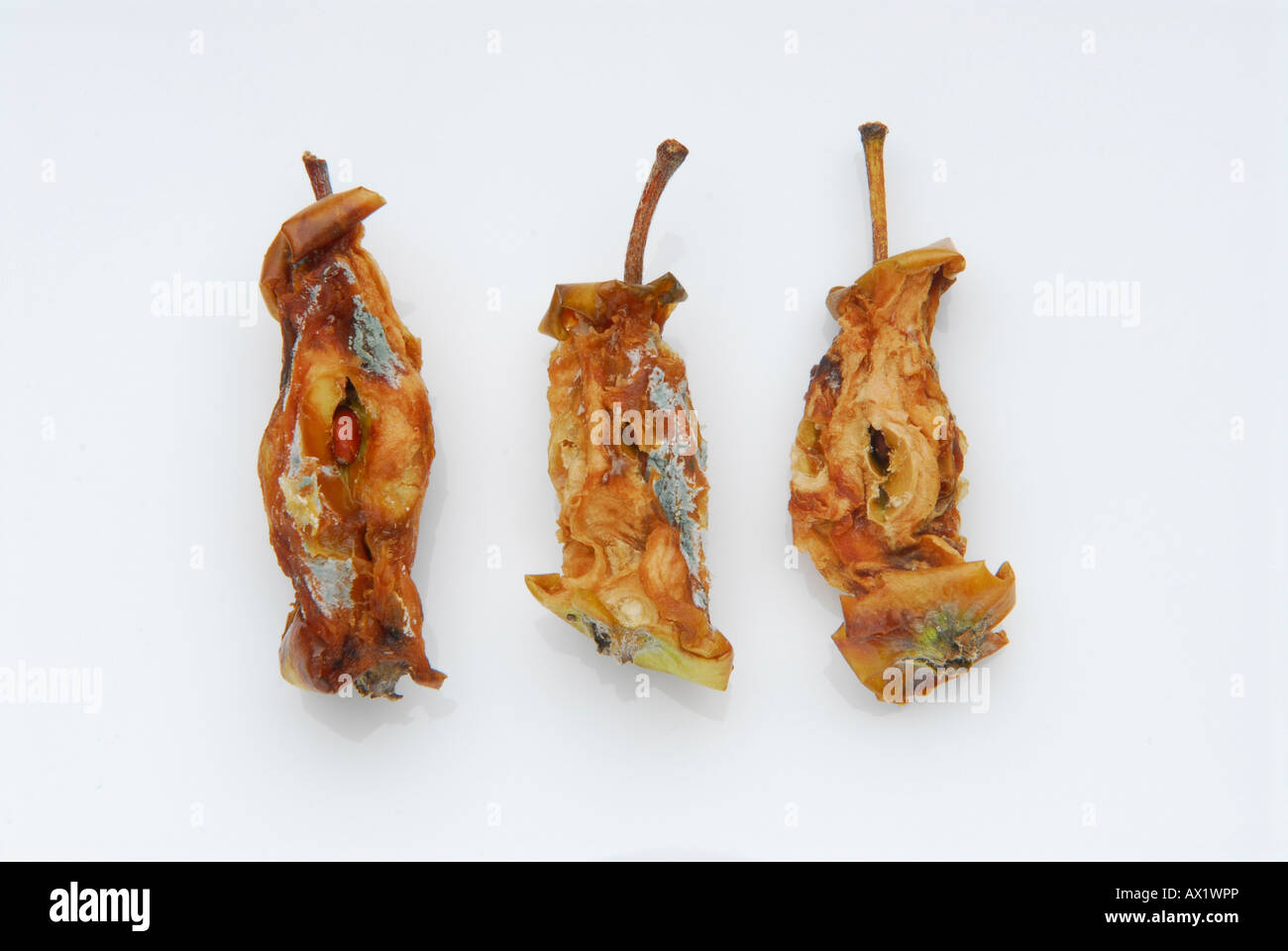 Rotting apple cores - Stock Image