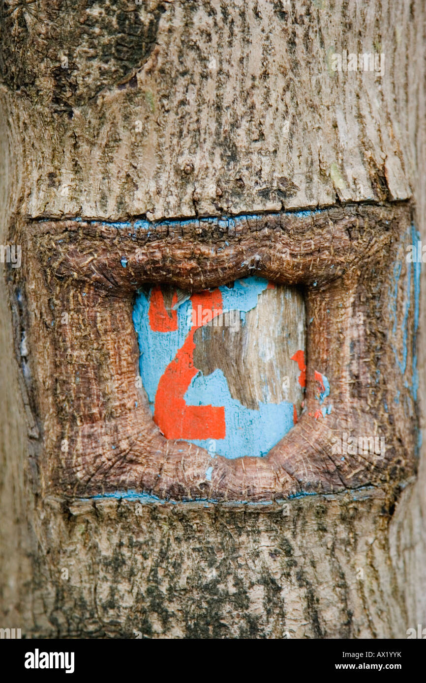 The number 2 marked on a tree trunk - Stock Image