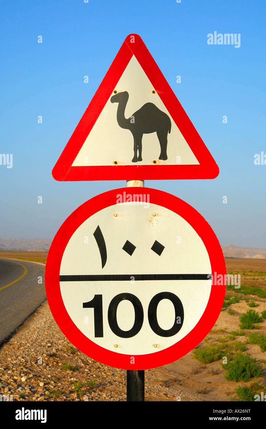 Road sign, beware of camels, speed limit, Sultanate of Oman - Stock Image