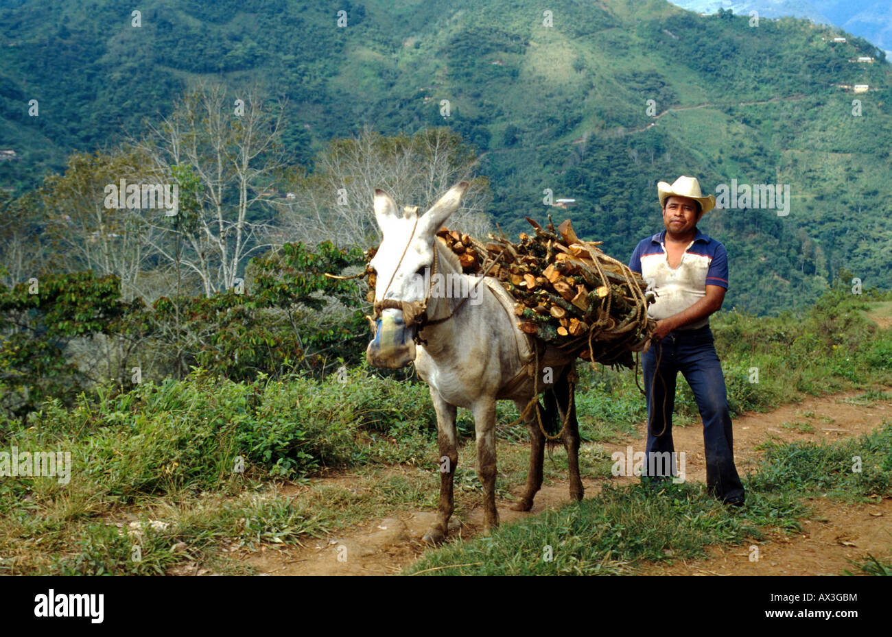 MEXICO. PEASANT CARRYING FIREWOOD IN THE MOUNTAINS OF OAXACA SOUTHERN MEXICO Photo Julio Etchart - Stock Image