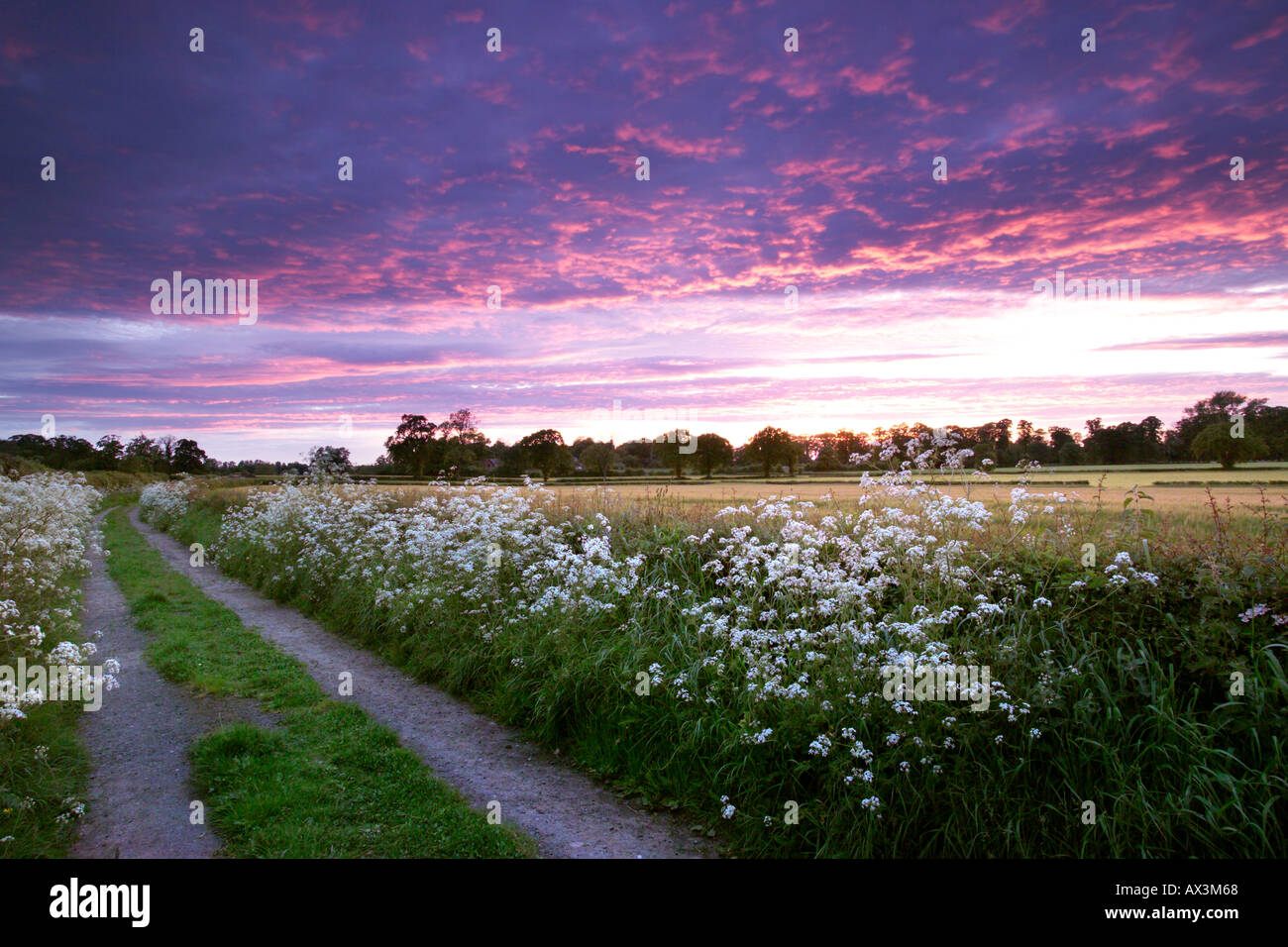 Sunset afterglow over corn fields and country lane, Askham Bryan village, York. - Stock Image