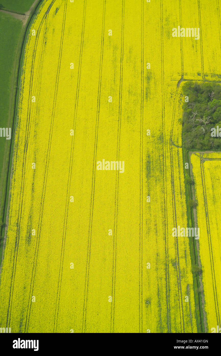 Aerial view of a field with a crop of oilseed rape growing in it, also known as rape or rapeseed Stock Photo