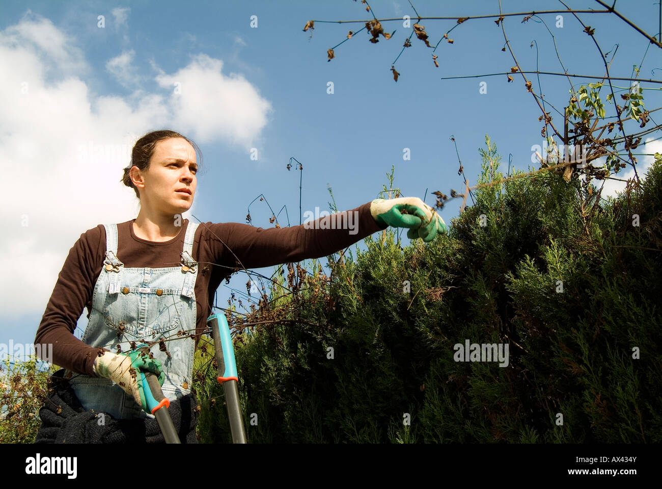 Gardener woman pruning a cypress fence - Stock Image