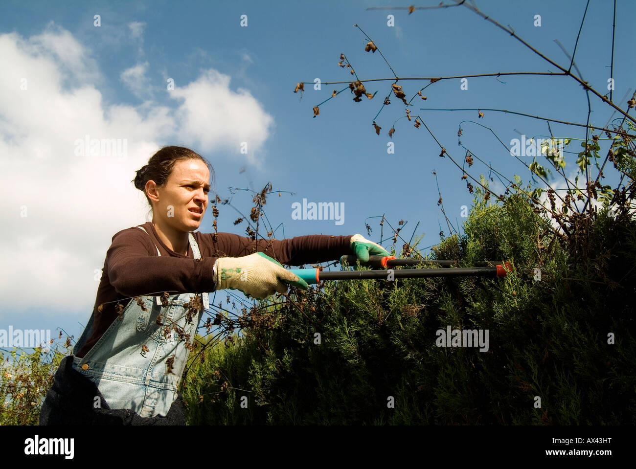 Gardener woman pruning a cypress fence Stock Photo