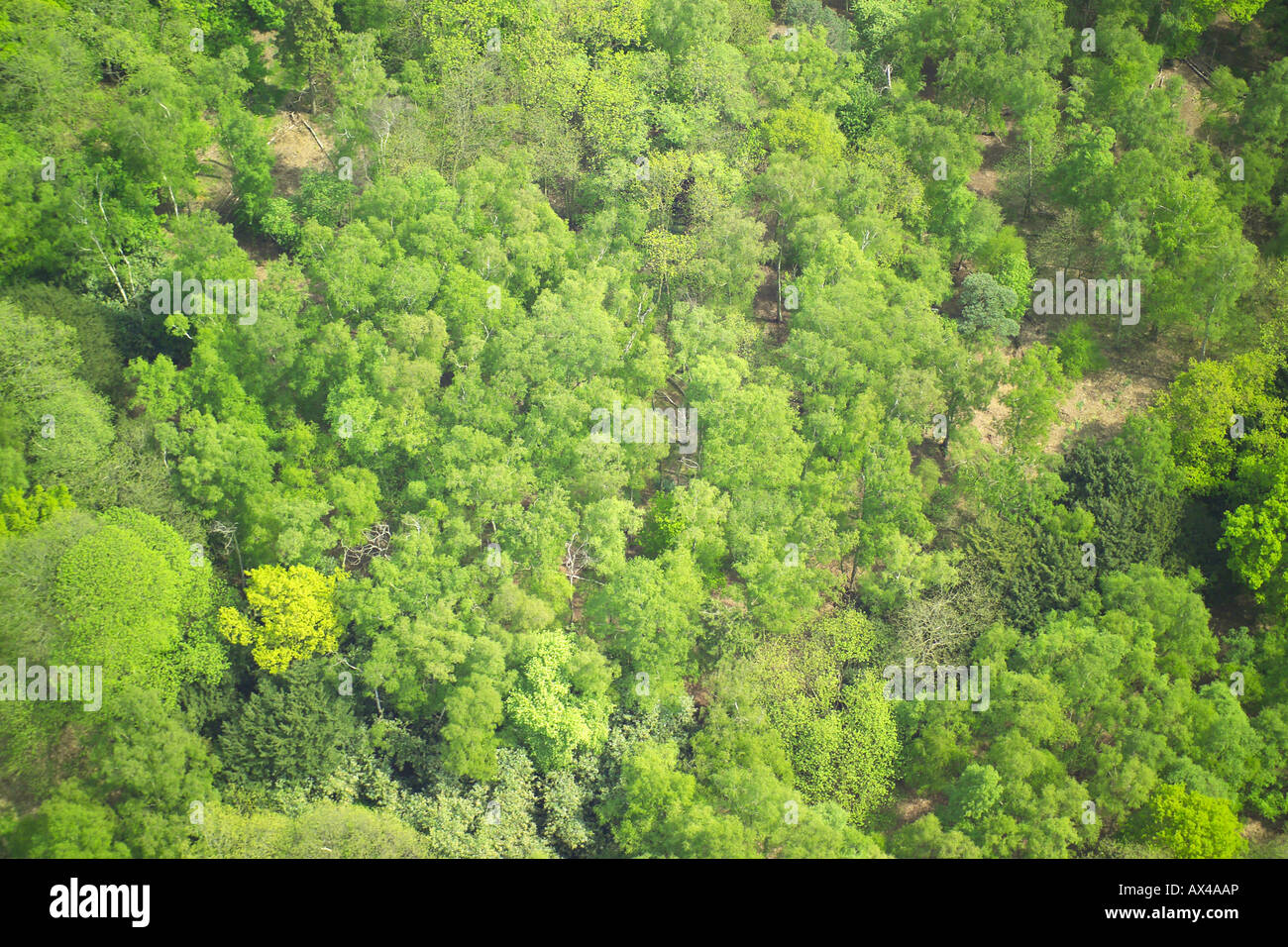 Aerial view of woodlands consisting of Deciduous Trees Stock Photo