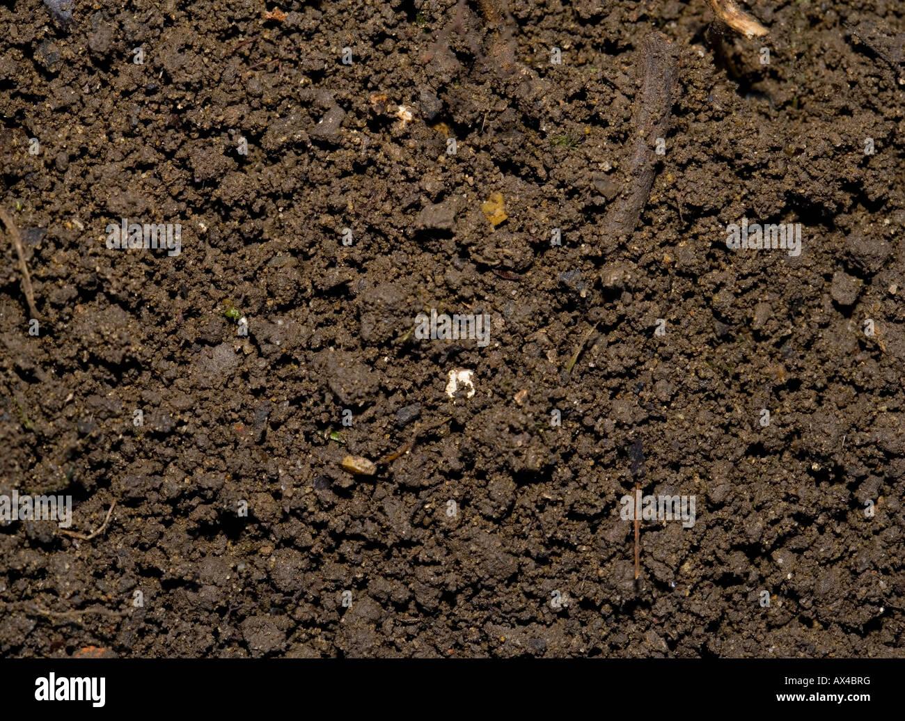 Weed free garden soil - Stock Image