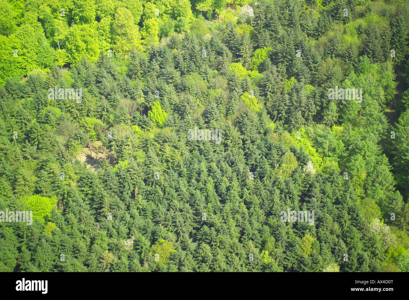 Aerial view of woodlands consisting of Deciduous and Coniferous Trees Stock Photo