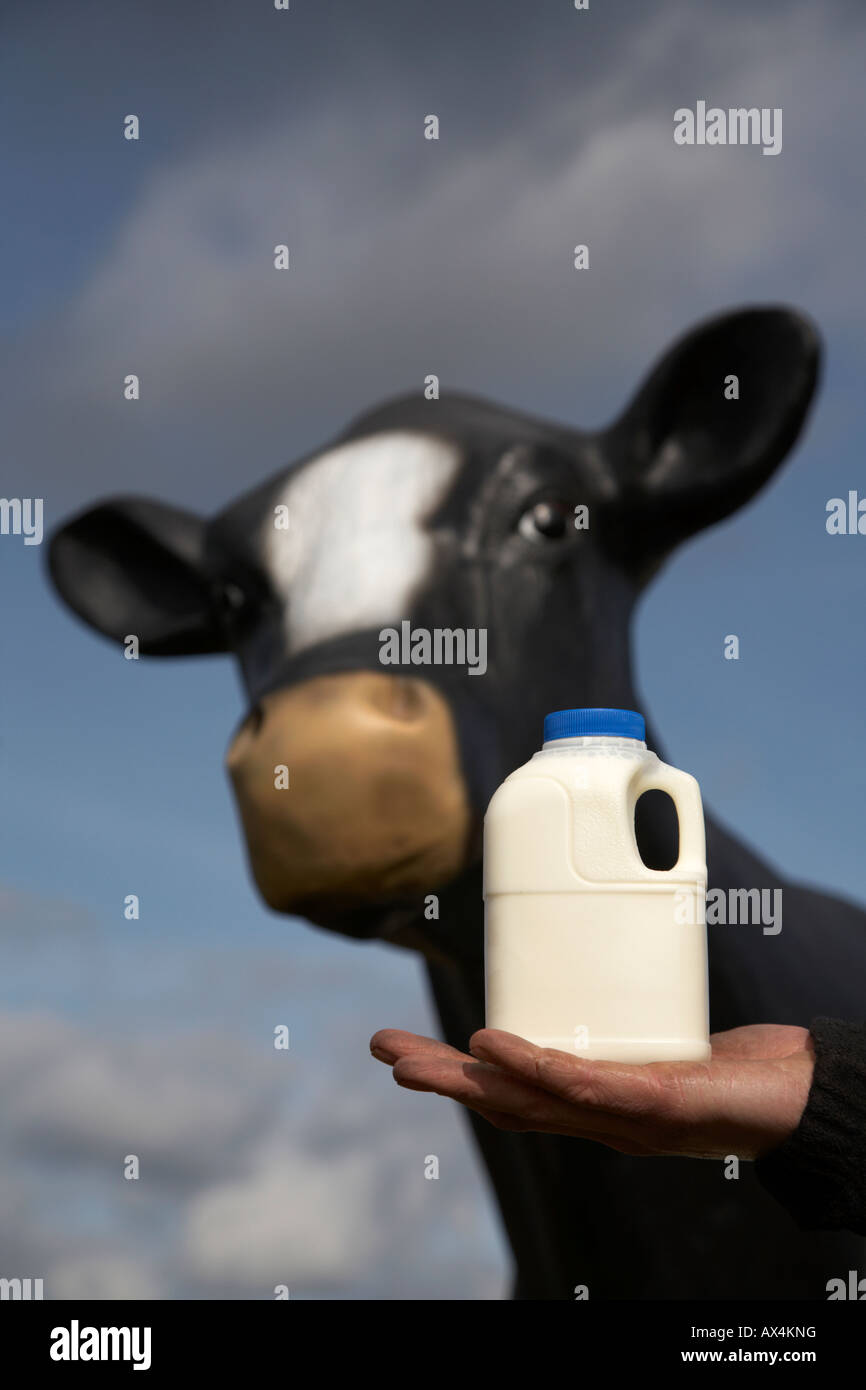 mans dirty hand holding a pint of milk in a plastic carton in front of a fibreglass imitation cow used for educational - Stock Image