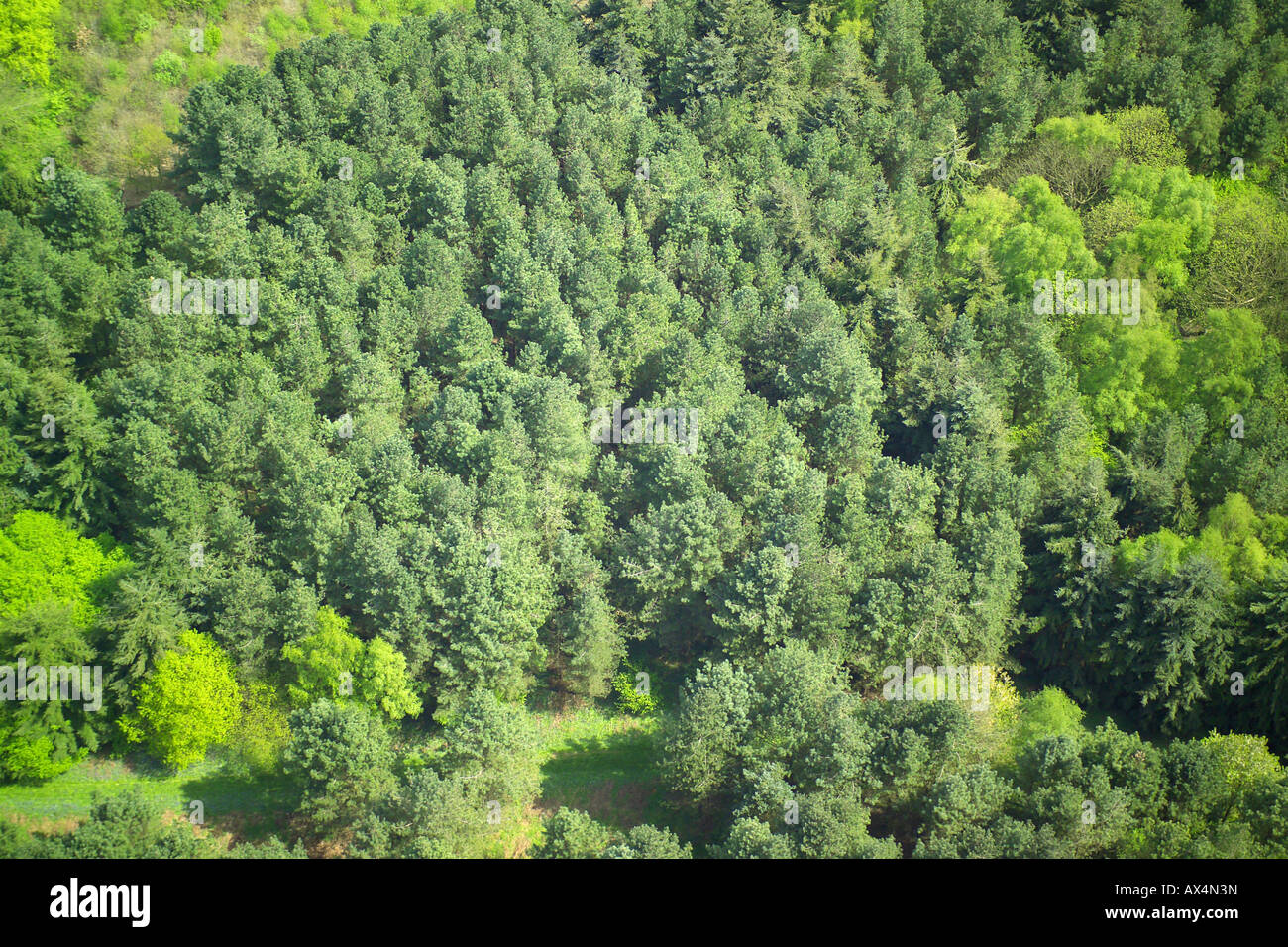 Aerial view of woodlands consisting of Coniferous Trees Stock Photo