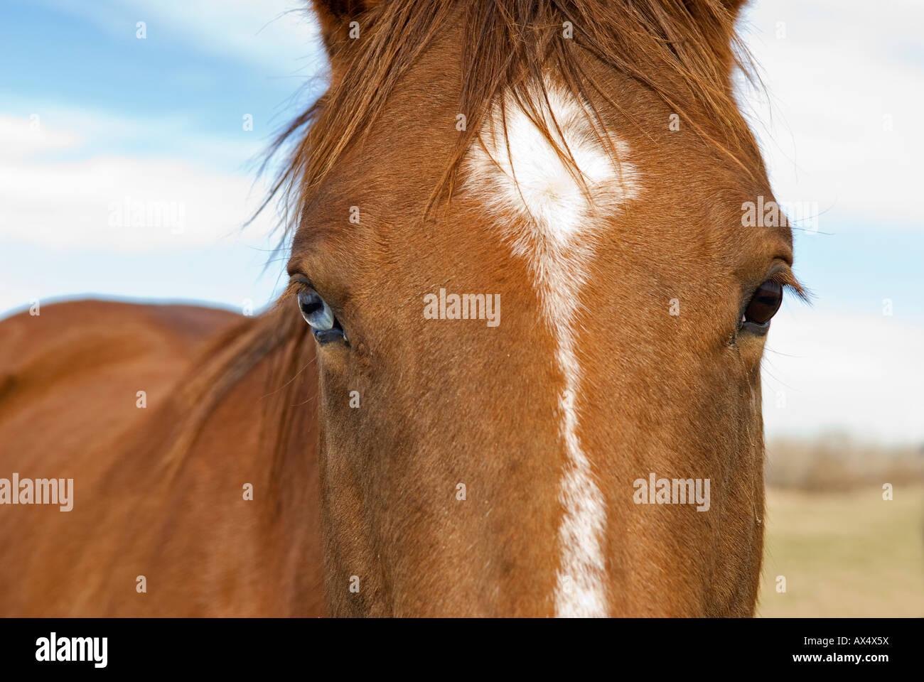 5071 best images about Horses on Pinterest   Dressage