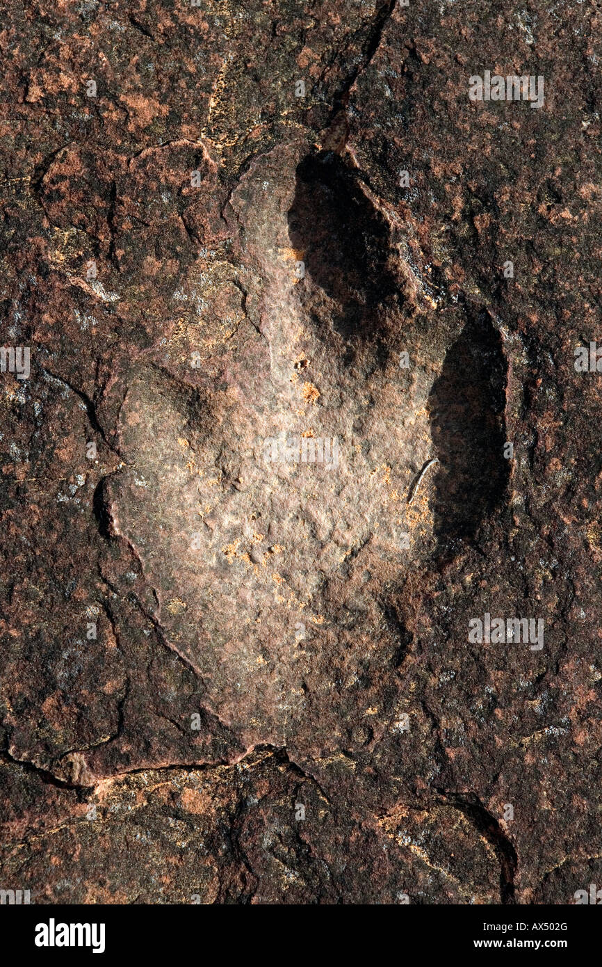200 million year old dinosaur footprint in Waterberg Plateau Park Namibia - Stock Image