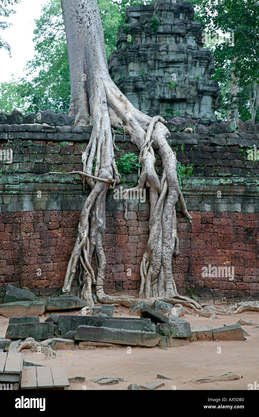 Ta Phrom Jungle Temple Temples of Angkor Siem Reap Cambodia Asia - Stock Image