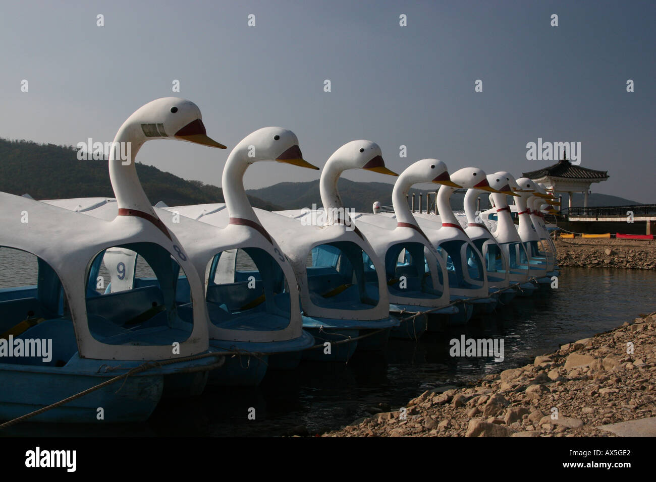 Swan pedal boats in South Korea Stock Photo