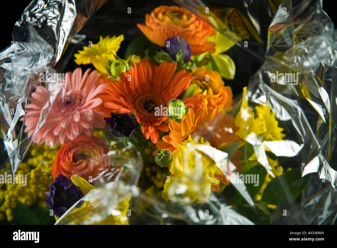 Bouquet of flowers wrapped in cellophane Stock Photo
