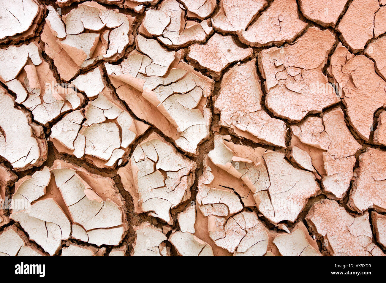 Dried-up riverbed, Grand Staircase National Monument, Utah, USA - Stock Image