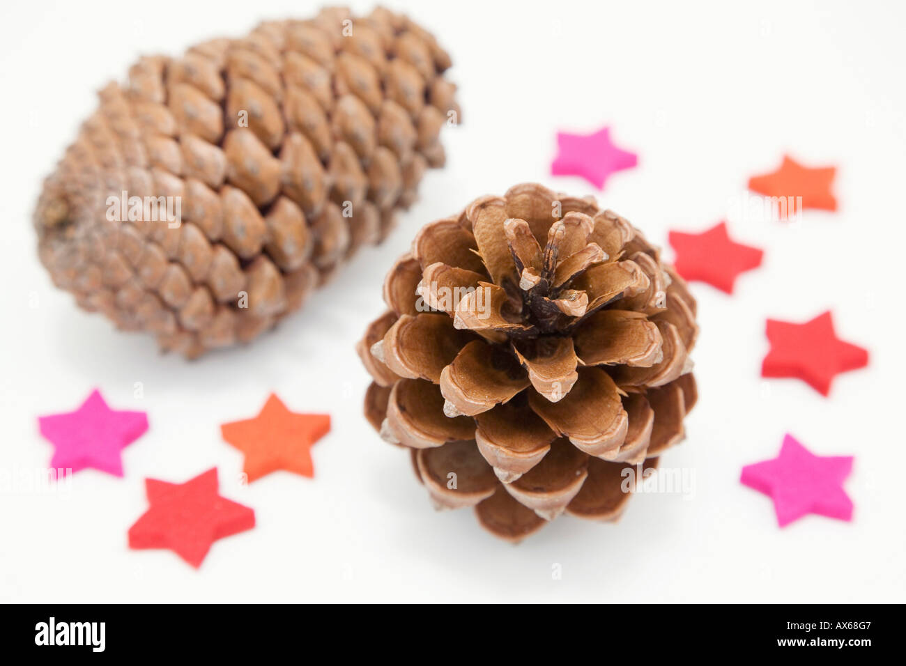 Fir cone and star-anise - Stock Image