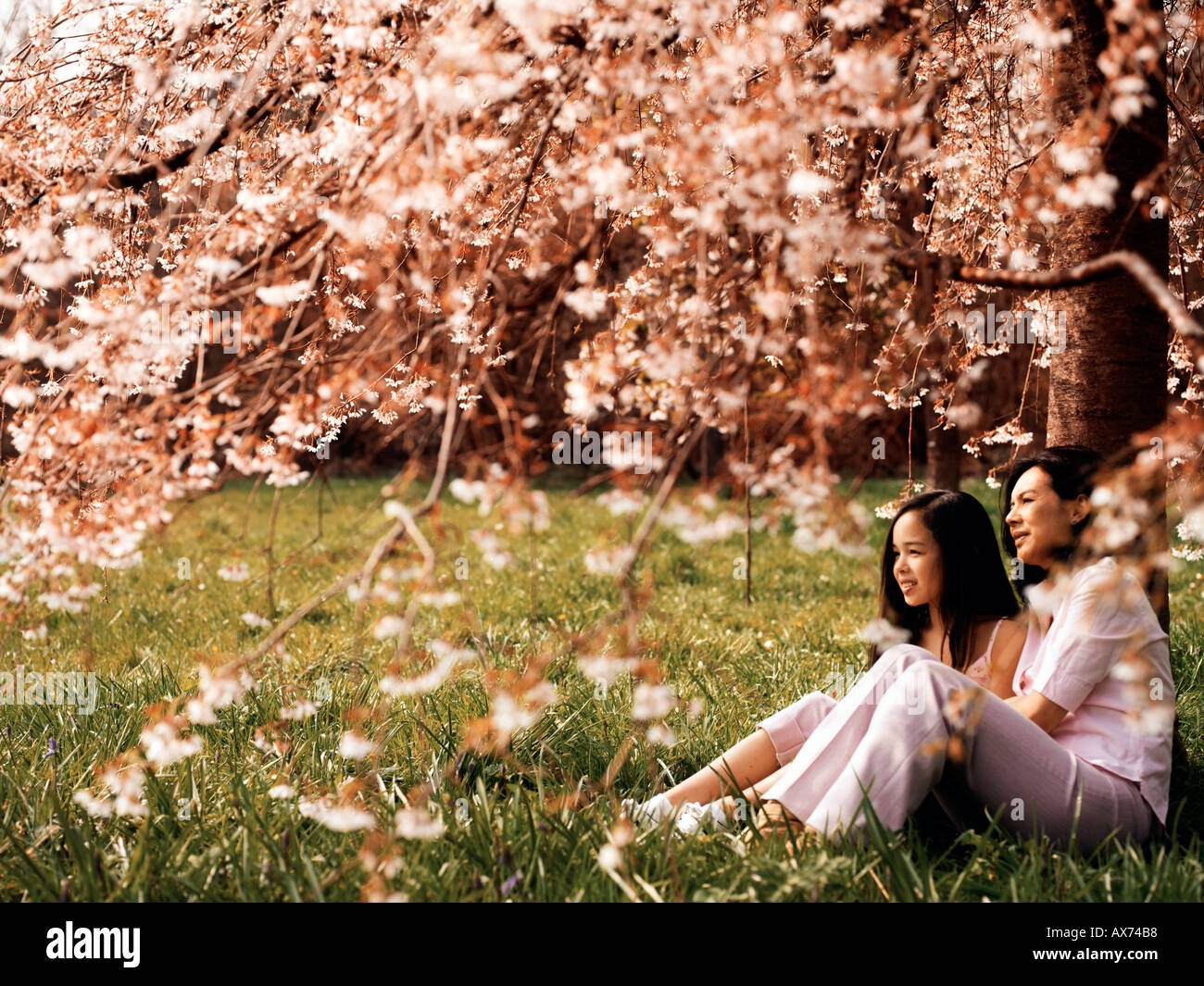 mother and daughter sat underneath cherrytree in blossom - Stock Image
